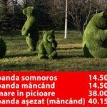 Clotilde demască jaful PSD: Urs panda așezat (mâncând) – 40.153 lei, cumpărăturile făcute de ADP Sector 1