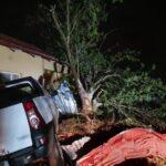 O furtună puternică a distrus locuințe și a doborât copaci seculari în Olanda